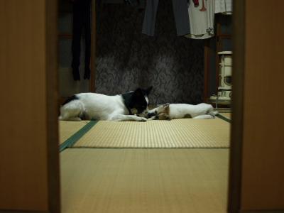 201011_B204679.JPG