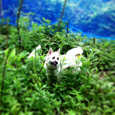 20110620-hanada.jpg