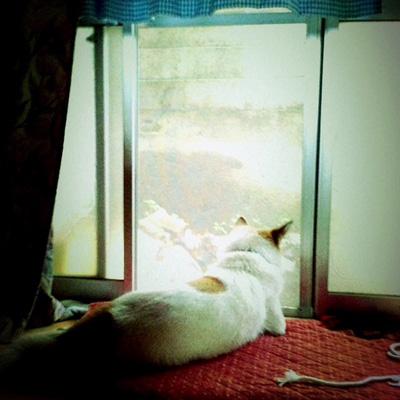 20110625-hanada.jpg