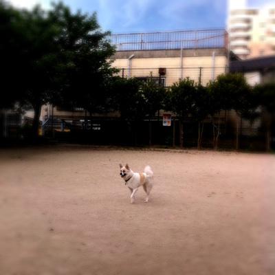 20110718-hanada2.jpg