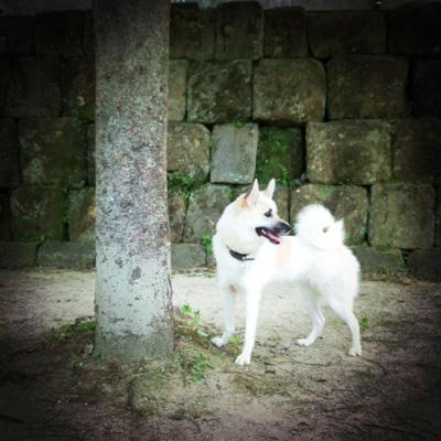 20110718-hanada3.jpg