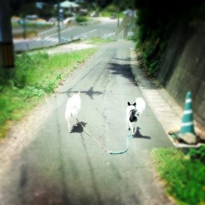 20110722-tamihana.jpg