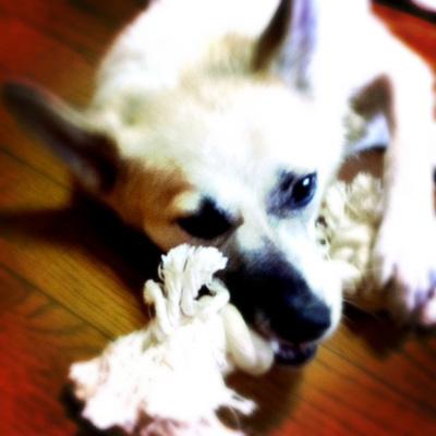 20110825-hanada2.jpg
