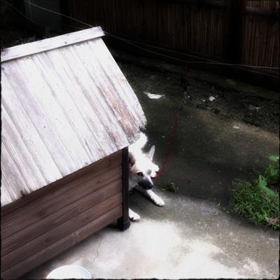 20110826-hanada1.jpg