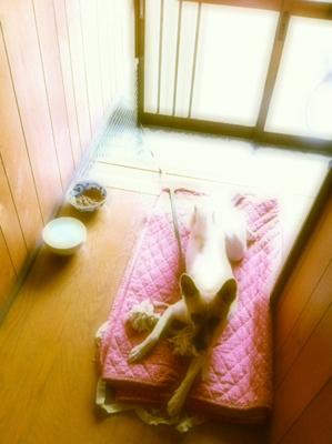 20110921-hanada1.jpg