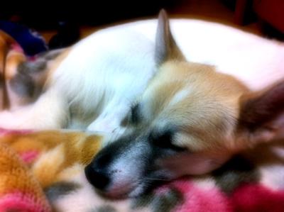 20110921-hanada3.jpg