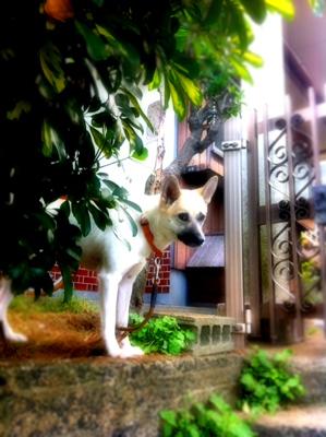 20110927-hanada.jpg