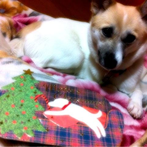 20111223-hanada.jpg