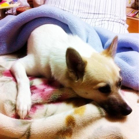 20111224-hanada1.jpg