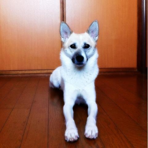 20120107-hanada1.jpg