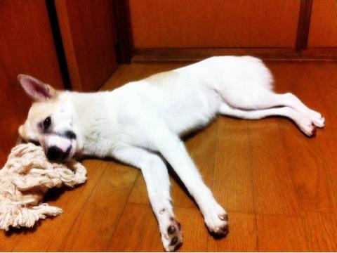 20120112-hanada2.jpg