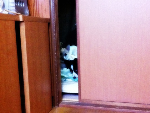 20120116-tamihana1.jpg