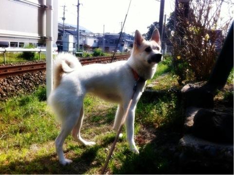 20120314-hanada2.jpg
