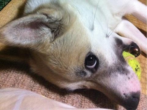 20120318-hanada3.jpg