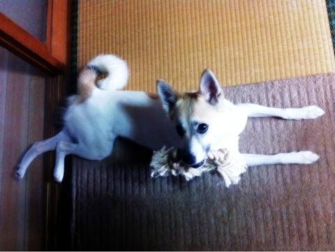 20120518-hanada.JPG