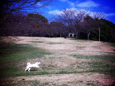 20130314-hanada1.jpg