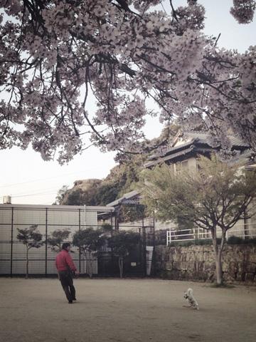 20130331-hanada1.jpg