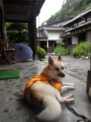 20130610-hanada1.jpg