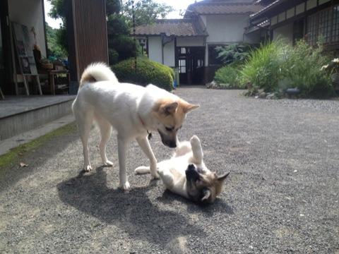 20130618-hanada3.jpg