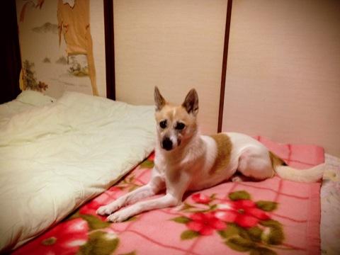 20131215-hanada.jpg