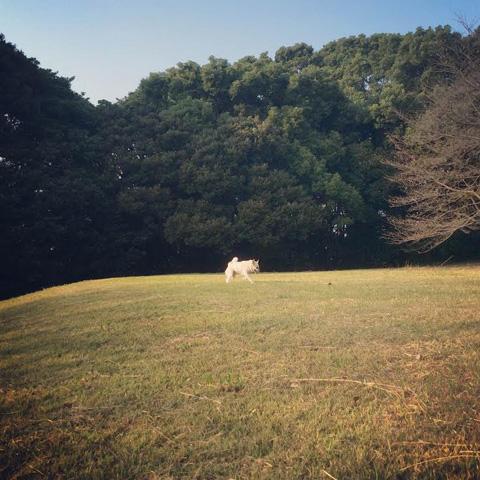 20151023-hanada2.jpg