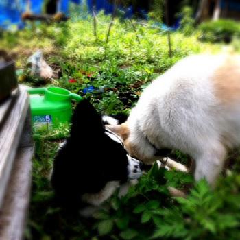 20110614-tamihana.jpg
