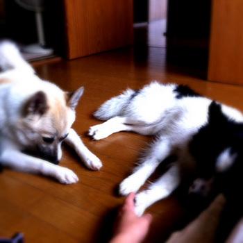 20110627-tamihana.jpg