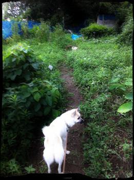 20110817-hanada2.jpg