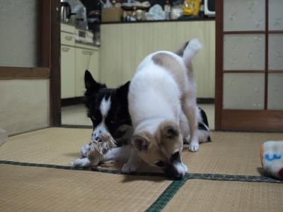 201011_B304794.JPG