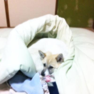 20110530-hanada2.jpg