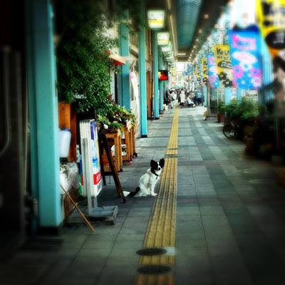 20110722-tami.jpg