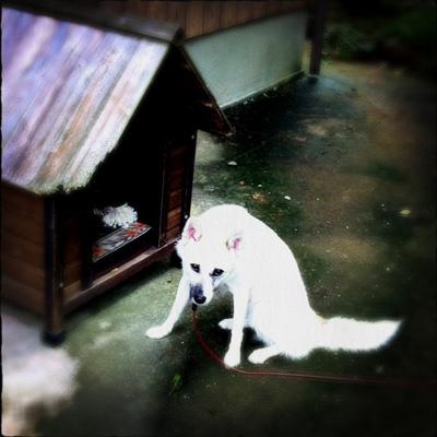 20110826-hanada2.jpg