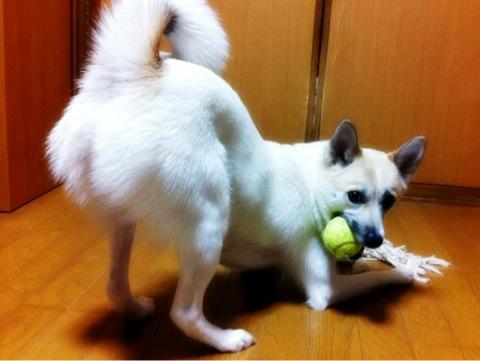 20120305-hanada.jpg