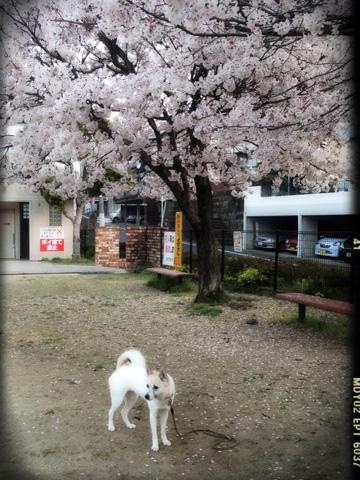 20130328-hanada1.jpg