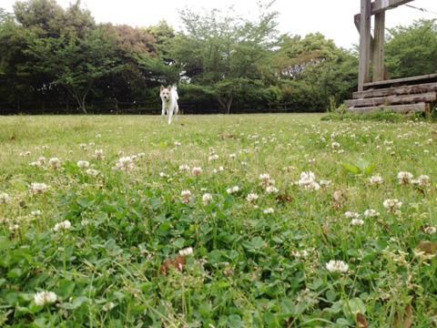 20130424-hanada.jpg