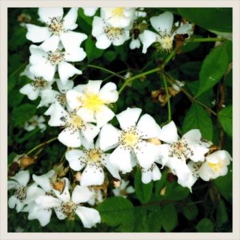 20110516-flower.JPG